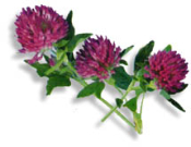 Red Clover Leaf & Flwr Premium Cut/Sifted-Cert Organic-1 lb-USA