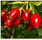 Rosehips Seedless Premium Cut/Sifted-100% Natural-1 lb.-Chile