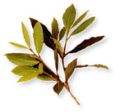 Bay Leaf Laurel Premium Whole-100% Natural-1 lb.-Turkey