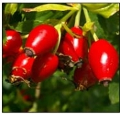 Rosehips Seedless Premium Whole-100% Natural-1 lb.-Chile